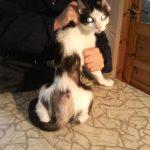 Psychologia zwierząt – cz. IV. Zachowania obsesyjne i kompulsywne u kotów