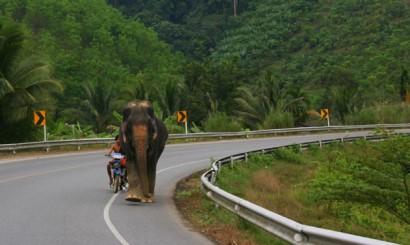Egzotyczny uczestnik ruchu drogowego.
