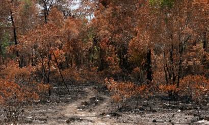 Każda strategia przygotowania terenu pod uprawę jest dobra, także wypalenie roślinności.