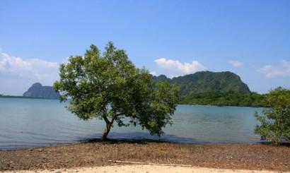 Samotne mangrowce na skraju morza. Las mangrowy to naturalny ekosystem tutejszych wybrzeży, jeden z najbogatszych, tak złożonych ekosystemów na świecie. Niestety, to właśnie ten rodzaj lasów znika z powierzchni Ziemi najszybciej, przegrywając nierówną walkę z przemysłem turystycznym.