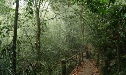 Tropikalny las deszczowy o świcie.