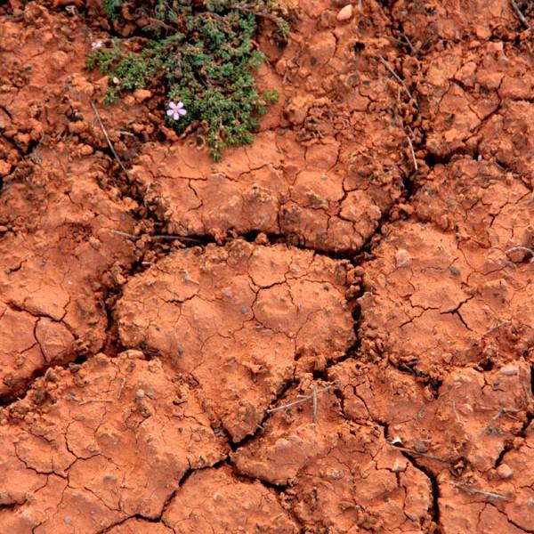 Roczne opady deszczu oscylują tutaj w granicach 150 mm. Od kilku lat trwa susza.