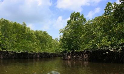 Lasy mangrowe niegdyś porastały niemal całe wybrzeża północnej i południowej Lanty, dziś większość z nich wycięto, by zrobić miejsce na złote plaże i bary dla turystów.