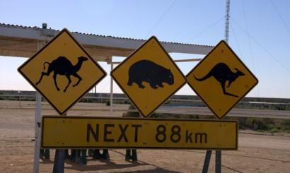 Mimo wielu zachwycających turystów znaków drogowych, na autostradach giną tysiące zwierząt.
