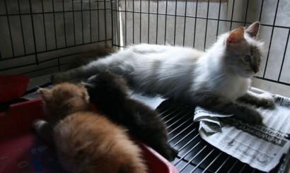 Izolatka. Chora matka i jeszcze zdrowe kociaki, których ze względu na wiek i nieodpowiedzialność właścicielki nie mogliśmy odseparować.