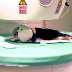Rezonans magnetyczny w medycynie weterynaryjnej. Cz. I