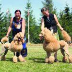 Rozród psów, łatwy i przyjemny. Przygotowanie suki do rozrodu i wybór reproduktora.