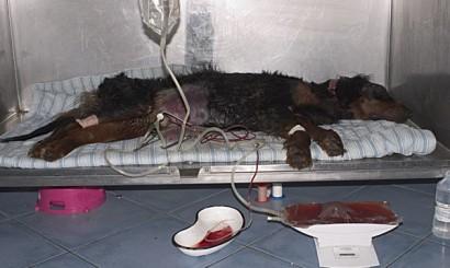Fot. 2. Pacjent podczas dializy otrzewnowej.