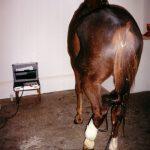 Leczenie zakażeń i ran wyłącznie poprzez laseropunkturę