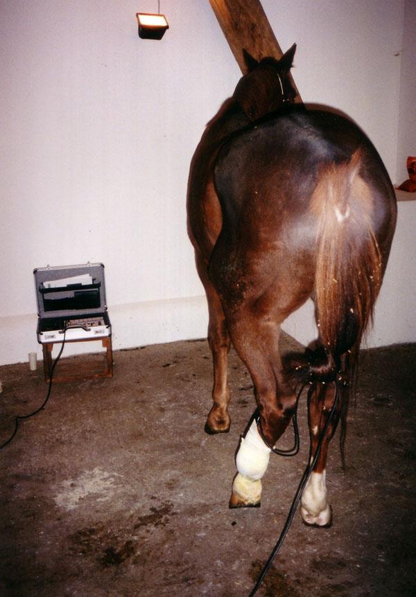 Fot. 6. Sesja terapeutyczna – naświetlanie sondą prysznicową 6x60 W, przytrzymywaną przez bandaż.