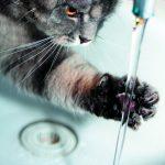 Psychologia zwierząt – cz. III. Życie kotów wśród ludzi i wspólne problemy