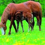 """Psychologia zwierząt – cz. VII. """"Kto dosiadał konia, ten dosiadał wiatr…"""""""