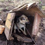 Interwencje OTOZ Animals