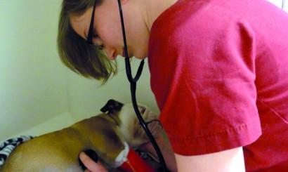 Badanie kliniczne buldożki po operacji przepukliny pępkowej.