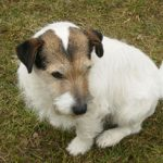 Psychologia zwierząt – cz. IX. Zespół zaburzeń poznawczych u psów