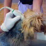 Radiografia i ultrasonografia w schorzeniach układu nerwowego