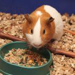 Prof. Elżanowski: nowa ustawa niekoniecznie poprawi los zwierząt doświadczalnych