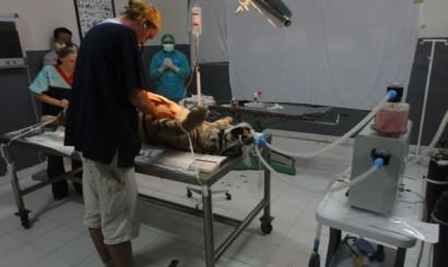Szczęśliwie zoo dysponuje aparatem do anestezji wziewnej.