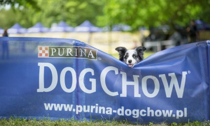 1_Dog Chow Disc Cup_Wrocąaw