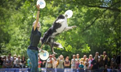 4_Dog Chow Disc Cup_Wrocąaw