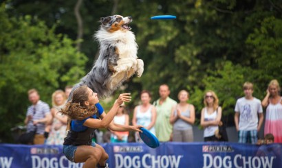 5_Dog Chow Disc Cup_Sopot