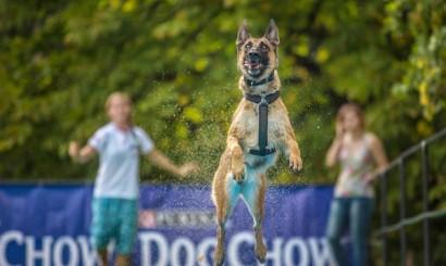 8_Dog Chow Disc Cup_Warszawa