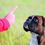Psychologia zwierząt – cz. X. Uczenie się i zrozumienie