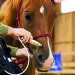 Laseropunktura dla koni