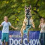 DOG CHOW DISC CUP 2014 – zawody latających psów już za nami!