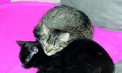 Niewydolność Nerek U Kotów Weterynarianews