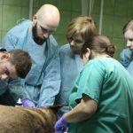 Klinika nagłych przypadków w Katowicach – relacja