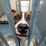 Jak zwierzęta wspierają nas w ciężkich czasach? Czy epidemia to dobry moment na adopcję psa lub kota?