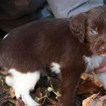 Psychologia zwierząt – cz. XII. Brudzenie w domu przez psa – rozpoznawanie, klasyfikacja, terapia