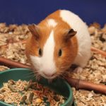 Prezydent podpisał ustawę o ochronie zwierząt doświadczalnych