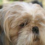 Choroby przyzębia u psów – podstawowe informacje