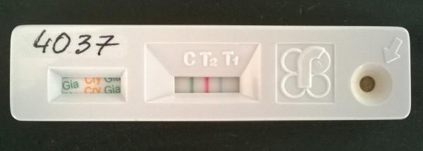 Fot. 3. Szybki test immunochromatograficzny RIDA® QUICK Cryptosporidium/Giardia Combi – wynik dodatni (T1 – niebieski pasek) w kierunku Cryptosporidium parvum oraz wynik dodatni (T2 – czerwony pasek) w kierunku Giardia intestinalis.