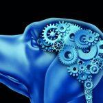 Psychologia zwierząt – cz. XIV. Neurobehawior