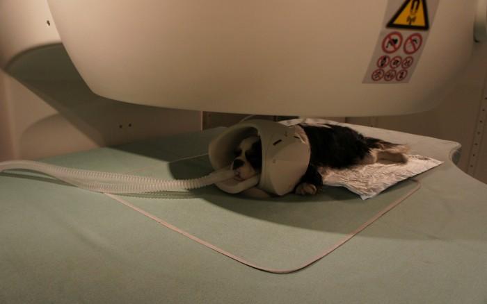 Fot. 5. Pacjent podczas badania MRI. Widoczna cewka głowowa, stanowiąca cewkę odbiorczą.