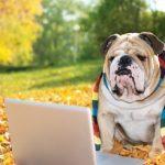Z psem do pracy na legalu?  Inicjatywa PetsatWork pokazuje, że to proste!