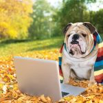 Powstała specjalna aplikacja i gadżet umożliwiające zrobienie idealnego selfie z psem
