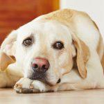 Potwierdzono hipotezę samoświadomości u psów