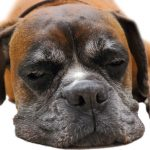 Konkurs dla psiarzy – Purina buduje Psie Stacje