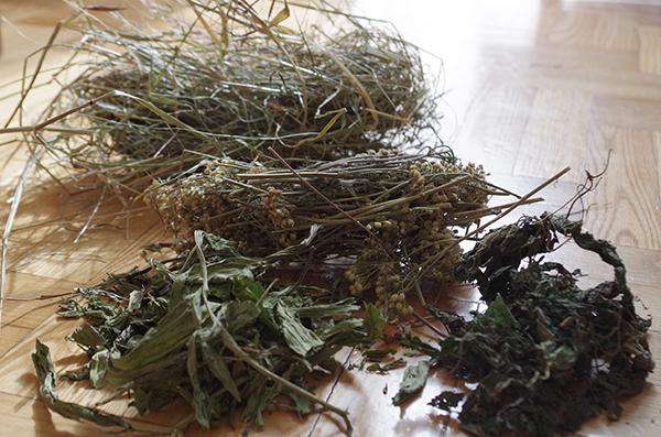Fot. 4. Siano, suszone zioła i liście są podstawą żywienia królika.