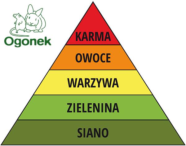 Piramida króliki