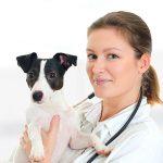 Klinika dla małych zwierząt na Wyspie Man poszukuje lekarza weterynarii