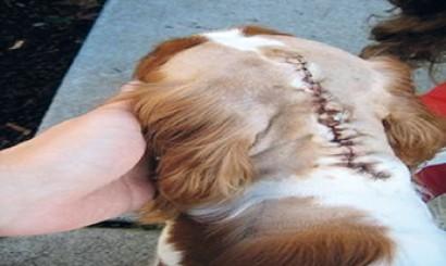 Fot. 16. Pacjent po leczeniu chirurgicznym.