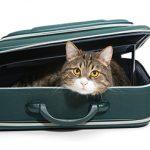 Polacy coraz częściej zlecają transport zwierząt za granicę