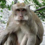 Rozpoznawanie poprawnych wypowiedzi występuje także u zwierząt