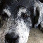 Przedświąteczne adopcje psów