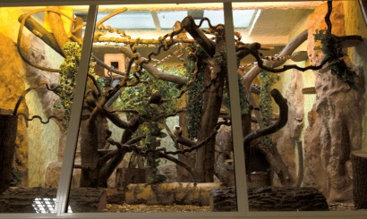Gęstwina lian, lin, pni i pnączy zapewnia maksymalne wykorzystanie przestrzeni w klatkach pazurkowców Łódzkiego Ogrodu Zoologicznego.